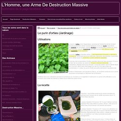 Le purin d'orties (Jardinage)