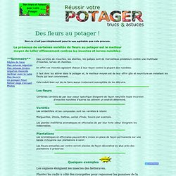 Association au potager plantes l gumes pearltrees - Association de legumes au potager ...