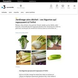 Jardinage zéro déchet : ces légumes qui repoussent à l'infini