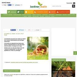 Jardinage en octobre : conseils et travaux
