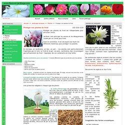 fleurs et jardinage - Protéger vos plantes du froid