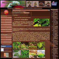 PRO JARDINS - Jardinier Paysagiste, Auvergne, Issoire, Clermont Ferrand - L'univers des mousses