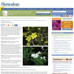 Jasmine Plants: Fragrant Vines for the House and Garden - HorticultureHorticulture