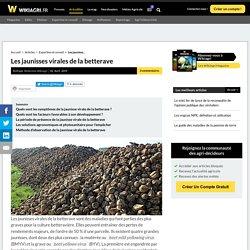 WIKIAGRI 02/04/19 Les jaunisses virales de la betterave