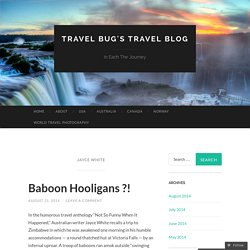 Travel Bug's Travel Blog
