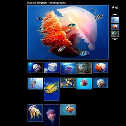 mosaic jellyfish - photography, Animal photos, animal pictures