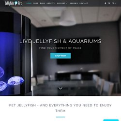 Jellyfish Tanks | Pet Jellyfish, Jellyfish Aquariums, and Accessories