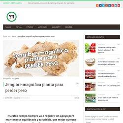 Jengibre magnifica planta para perder peso ⋆ Nutrición Salud