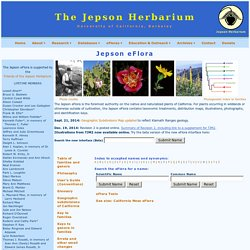 Jepson eFlora