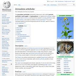 Jerusalem artichoke - Wikipedia