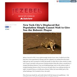 Updates: New York City's Displaced Rat Population Simply Cannot Wait to Give You the Bubonic Plague