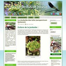 La Joubarbe des toits : sempervivum tectorum