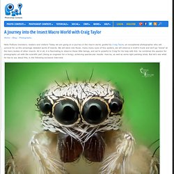 A Journey into the Insect Macro World with Craig Taylor