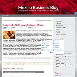 MEXICO BUSINESS BLOG 15/10/13 Judge halts GMO corn planting in Mexico