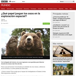 ¿Qué papel juegan los osos en la exploración espacial? - BBC Mundo