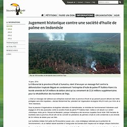 Succès - Jugement historique contre une société d'huile de palme en Indonésie