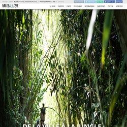 De la ville à la jungle : les étonnants marais de Bourges