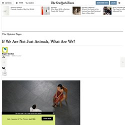 if-we-are-not-just-animals-what-are-we
