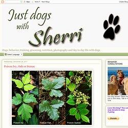 Dogs with Sherri: Poison Ivy, Oak or Sumac