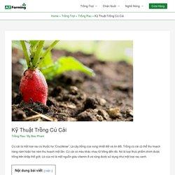 Kỹ Thuật Trồng Củ Cải - AZ Farming