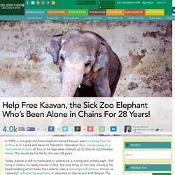 Help Free Kaavan, the Sick Zoo Elephant Who's Been Alone in Chains For 28 Years!