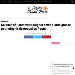 Kalanchoé : comment soigner cette plante grasse pour obtenir de nouvelles fleurs