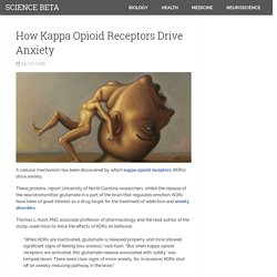 How Kappa Opioid Receptors Drive Anxiety