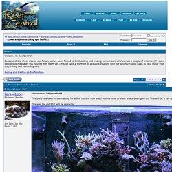 Karssebooms 145g sps build... - Reef Central Online Community