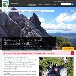 Kauaeranga Kauri Trail (Pinnacles Walk): Walking and tramping in Coromandel Forest Park, Kauaeranga Valley