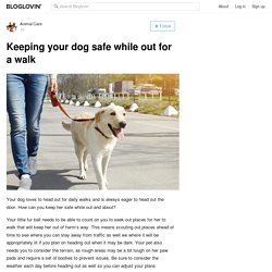 Keeping your dog safe while out for a walk