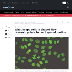 What keeps cells in shape? New research points to two types of motion