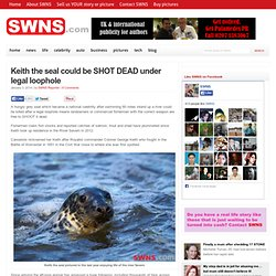 Keith the seal could be SHOT DEAD under legal loophole