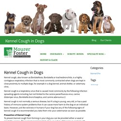 Kennel Cough in Dogs - Mourer Foster