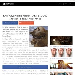 Khroma, un bébé mammouth de 50.000 ans vient d'arriver en France