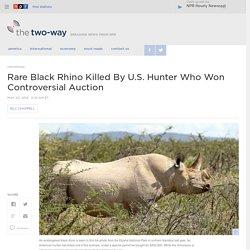 Rare Black Rhino Killed