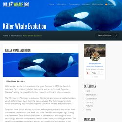 Killer Whale Evolution - Killer Whale Facts and Information