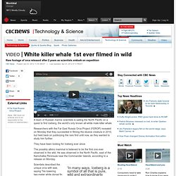 White killer whale 1st ever filmed in wild - Technology & Science
