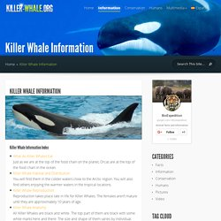 Killer Whale Information - Killer Whale Facts and Information