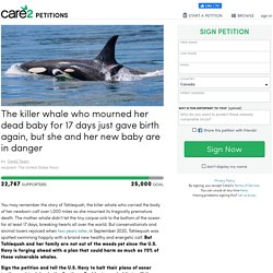 The killer whale who mourned her dead baby for 17 days just gave birth again, but she and her new baby are in danger