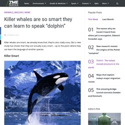 "Killer whales are so smart they can learn to speak ""dolphin"""