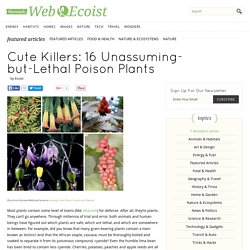 Cute Killers: 16 Unassuming-but-Lethal Poison Plants