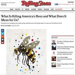 What Is Killing America's Bees and What Does It Mean for Us?