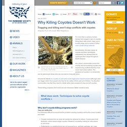 Why Killing Coyotes Doesn't Work