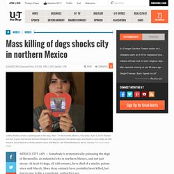 Mass killing of dogs shocks city in northern Mexico