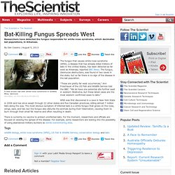 Bat-Killing Fungus Spreads West