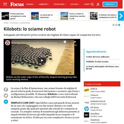 Kilobots: lo sciame robot