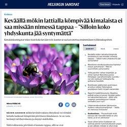 """Keväällä mökin lattialla kömpivää kimalaista ei saa missään nimessä tappaa – """"Silloin koko yhdyskunta jää syntymättä"""" - Kotimaa - HS.fi"""