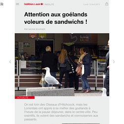 Attention aux goélands voleurs de sandwichs !