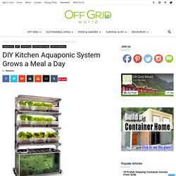 DIY Kitchen Aquaponic System Grows a Meal a Day