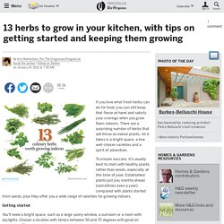 13 herbs to grow in your kitchen, with tips on getting started and keeping them growing